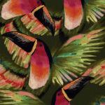 African tucán